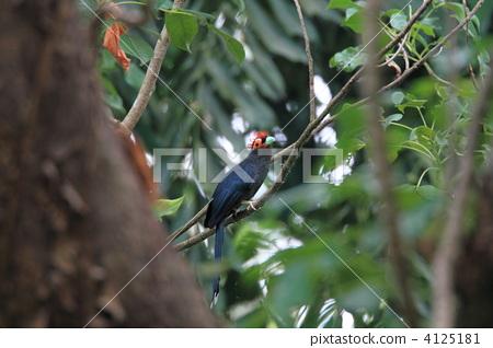 野生鸟类 热带雨林