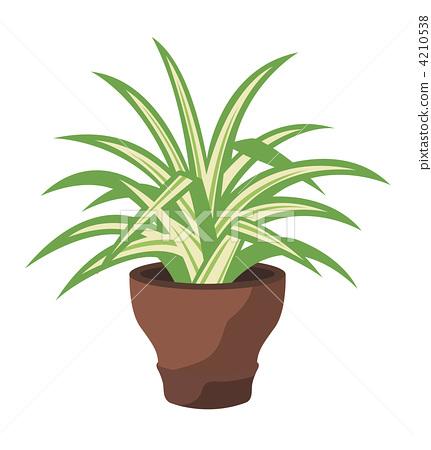 插图 植物_花 观叶植物 吊兰 室内盆栽 观叶植物  *pixta限定素材仅在