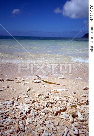 图库照片: 西表岛 九州 珊瑚