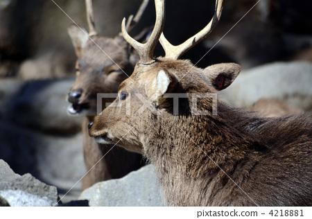 鹿 侧面图 动物宝宝