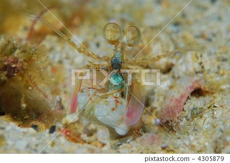 甲壳动物 stock photos