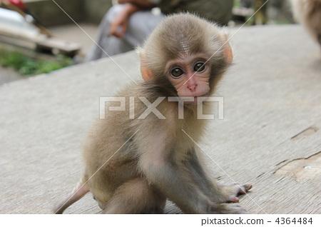海豚图库:猴婴猴子陆生照片维也纳动物音mv
