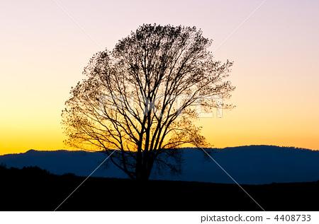夜晚 剪影 哲学树