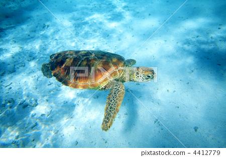 绿海龟 海龟 海洋动物