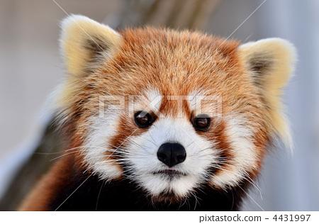 陆生动物 一只动物 动物群-图库照片