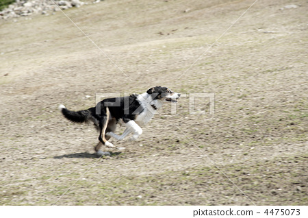 动物 奔跑的狗 动物宝宝