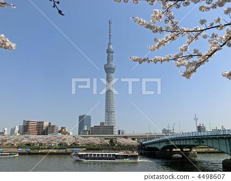 东京晴空塔 樱桃树 樱花