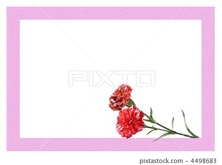 康乃馨 火焰 母亲节