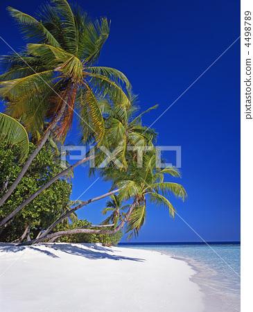 照片素材(图片): 海滩 椰子树 海岸