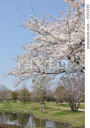 鹤见绿地 公园 粉色