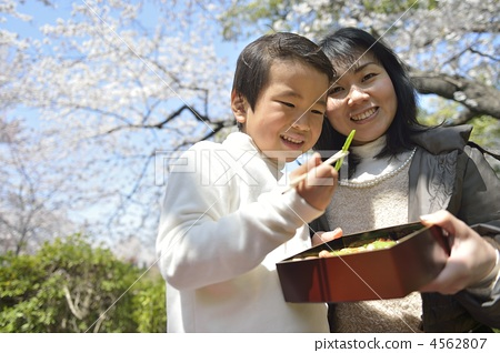 父母和小孩 家庭 樱桃树