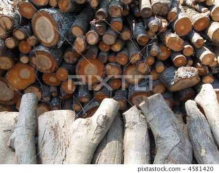 红豆杉梅松 木材 木头