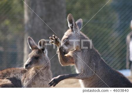 圆山动物园 动物宝宝