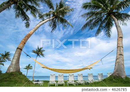 椰子树 大海 海事的