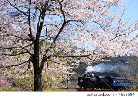 照片素材(图片): 大井川铁道 蒸汽机车 春暖花开
