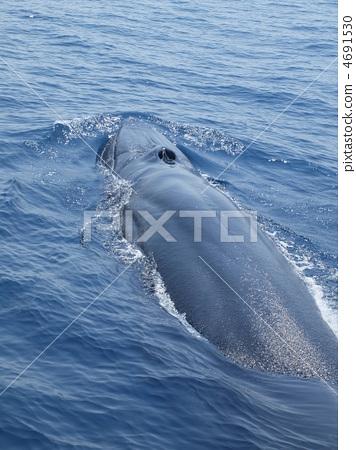 手机ui设计鲸鱼
