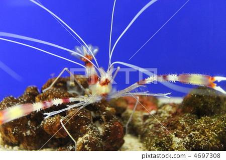 壁纸 海底 海底世界 海洋馆 水族馆 450_318
