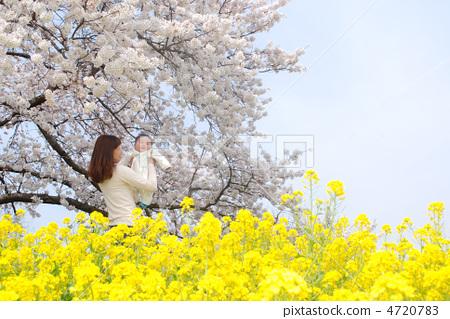 樱桃树 父母和小孩 樱花