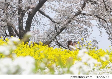 樱桃树 樱花 父母和小孩