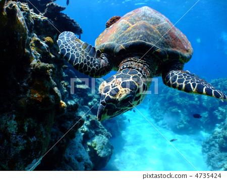 壁纸 海底 海底世界 海洋馆 水族馆 桌面 450_356