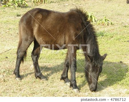 动物野马头像图片大全