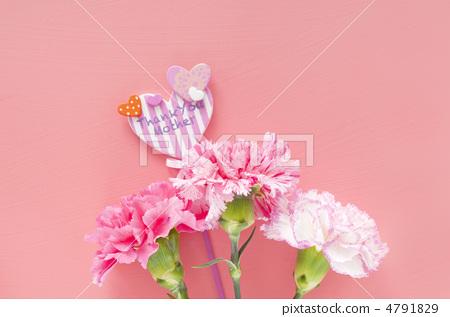 母亲节 康乃馨 柔和的颜色