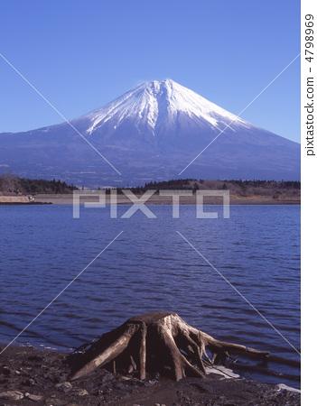 日本风景 山梨 富士山 照片 富士山 树 树木 首页 照片 日本风景 山梨