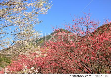春天小区里的风景树日记