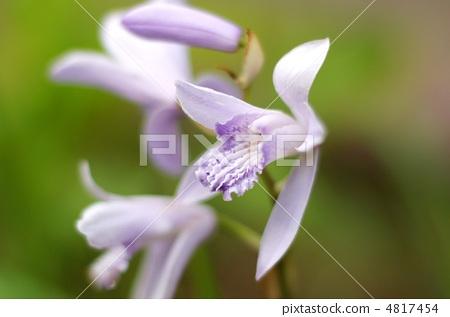 花朵 花朵 花 兰花  放大 收藏夹 下载水印图 相似 照片 »&nbsp