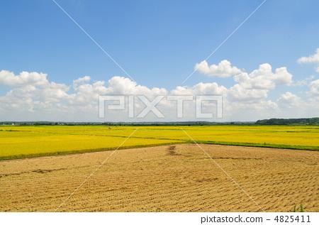 秋天的天空 首页 照片 植物_花 观叶植物 秋天的天空  *pixta限定素材