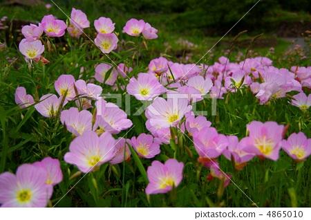 图库照片: 春天的花朵