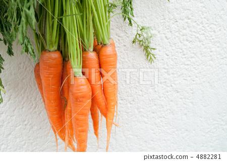 胡萝卜 叶子 绿色植物