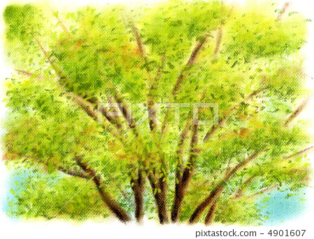 插图 质地 树 木纹 粉彩画树  *pixta限定素材仅在pixta网站,或pixta