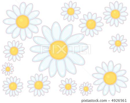 插图素材: 雏菊 花朵 花
