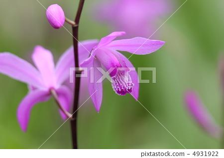 微信 头像 花朵 莲花展示