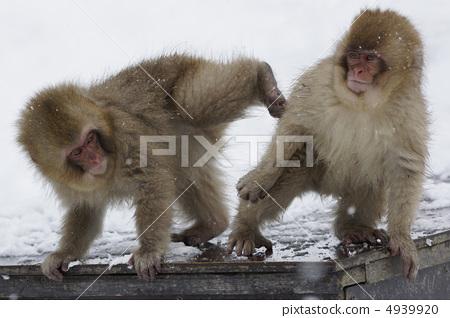 猴子 动物宝宝 动物群