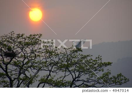 夕阳 白鹭 阳光明媚
