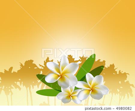 插图素材: 鸡蛋花 花朵 花