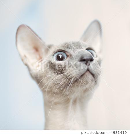 素描可爱高贵小猫
