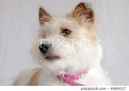 动物_鸟儿 狗 小狗 照片 狗 狗狗 室内 首页 照片 动物_鸟儿 狗 小狗