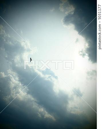 图库照片: 天空 鸟儿 鸟