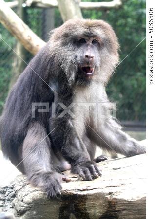杂食动物 濒危物种 中国