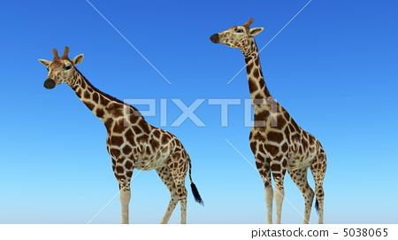 长颈鹿 网纹长颈鹿 动物宝宝