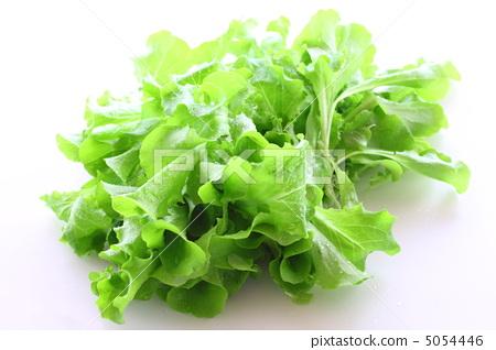 图库照片: 叶菜类 油麦菜 生菜图片