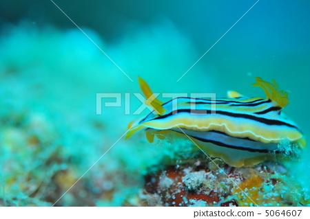 壁纸 动物 海底 海底世界 海洋馆 水族馆 鱼 鱼类 450_319