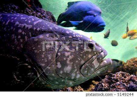 壁纸 动物 海底 海底世界 海洋馆 水族馆 鱼 鱼类 450_318
