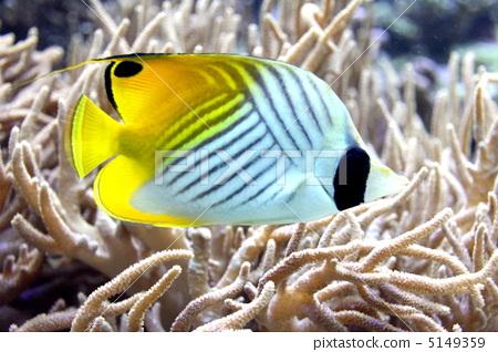 鱼_海鲜 热带鱼 照片 咸水鱼 海水鱼 海鱼 首页 照片 鱼_海鲜 热带鱼