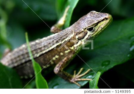 爬虫类的 爬行动物 陆生动物
