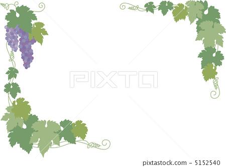 葡萄 葡萄藤 翠绿