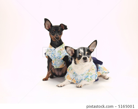 图库照片: 和服 浴衣 动物